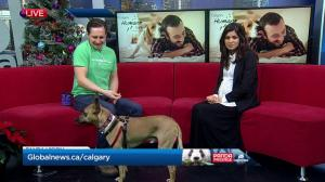 Calgary Humane Society Pet of the Week: Chop