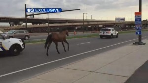 Philadelphia police round up horse loose on city streets