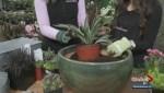 Gardenworks – Accent Rock Spring Planter