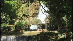 An excursion to YS Falls with Island Routes