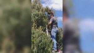 South Okanagan beekeeper removes swarm of bees