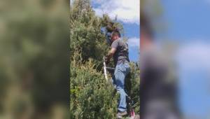 South Okanagan beekeeper removes swarm of bees