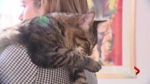 Catfe marks 1-year anniversary