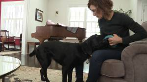 Winnipegger raising puppy to become guide dog