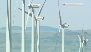 Alberta wind farms hold steady through wind warnings