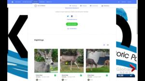 Southern Alberta town asks residents to help count deer using free app