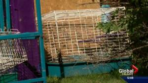 Calgary 'rabbit enthusiasts' sentenced after 92 animals seized from home in 2014