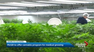 Focus Montreal: Learning to grow cannabis at McGill University