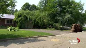 Fredericton cleaning up after intense storm