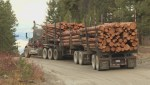 Trail users oppose logging in Carmi recreation area near Penticton
