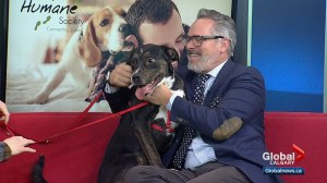 Calgary Humane Society Pet of the Week: Gus