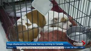 Helping dogs displaced by Hurricane Harvey