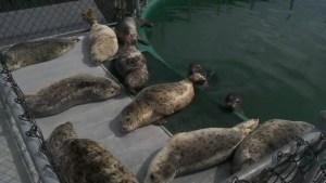 Marine Mammal Rescue Centre having record year