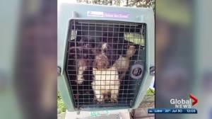 72 dogs seized from alleged puppy mill in rural northeast Edmonton
