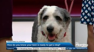 How do know if your teen is ready for a dog?