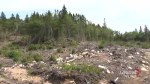Nova Scotia to lower clear-cutting on Crown lands, minister says