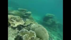 British diver dies at Great Barrier Reef