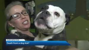 Can you die from a dog lick?