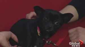 Adopt a Pet: Taco needs a new home