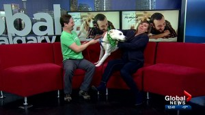 Calgary Humane Society Pet of the Week: Storm