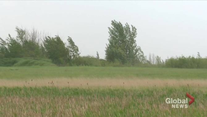 Over 200mm rain needed to ease drought conditions in southern Sask.