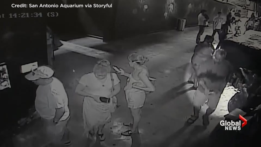 Trio steal shark from aquarium by disguising it as a baby