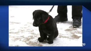 The Winnipeg Jets need your help in naming this puppy!