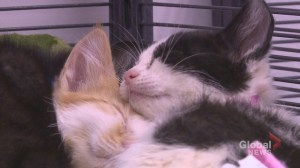 Cats abandoned on side of Alberta highway