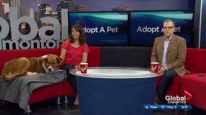 Adoptable Pets Second Chance Animal Rescue