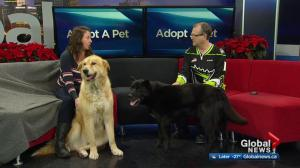 SCARS Edmonton with 2 big furry dogs