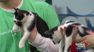 Pet of the Week: Natasha and Max