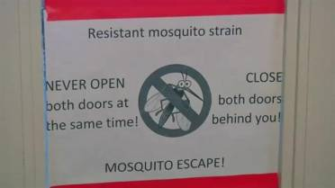 A better way to kill mosquitoes? Stress them out, researcher