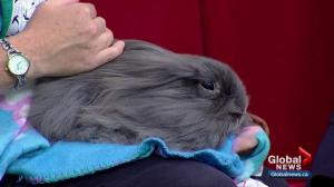 Calgary Humane Society Pet of the Week: Dusty