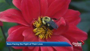 Bees in fight of their lives
