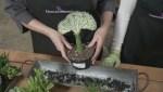 Gardenworks: Celebrating succulents