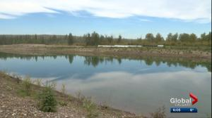 Calgary ring road opponents say province not enforcing Weaselhead protection order