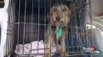 Hurricane Harvey rescue mission offers new hope for Houston dogs brought to Ontario