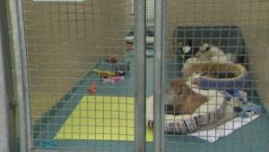 Renewed calls for animal rescue regulations
