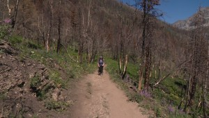 A look at restoration efforts at Waterton Lakes National Park