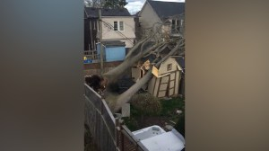 Tree falling on shed in Toronto neighbourhood caught on camera