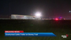 Cattle trailer overturns on Stoney Trail in Calgary
