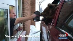 Discovery Wildlife Park charged over drive-thru bear video