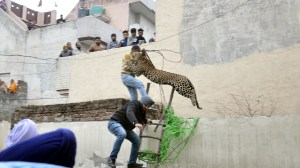 4 injured as leopard goes on rampage in India