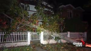 Windy night a problem for some in the lower mainland