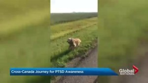 Alberta man takes his dog on cross Canada journey to raise PTSD awareness