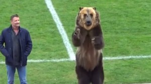 Performing bear at Russian soccer game prompts outrage