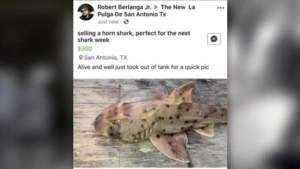 Shark stolen from Texas aquarium in a baby carriage