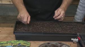 GardenWorks: Sowing seeds for Spring