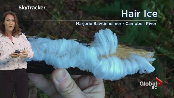 No, it's not hair: unusual ice formations turn up on Vancouver Island