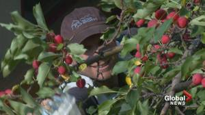 Canmore takes new steps to prevent bear dangers